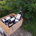 Viviani-bottles