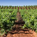 Marques de Tomares Vines