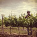 Cebolal Luis and Vines